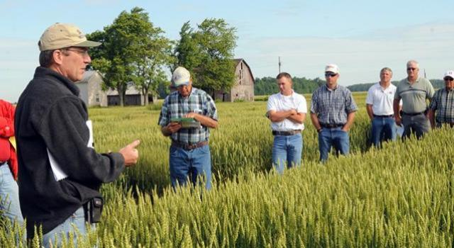 Farming having a discussion in a wheat field