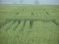 Northern Ohio Wheat Day - Sept. 7