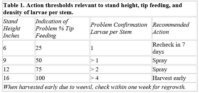 Action thresholds relevant to stand height, tip feeding, and density of larvae per stem