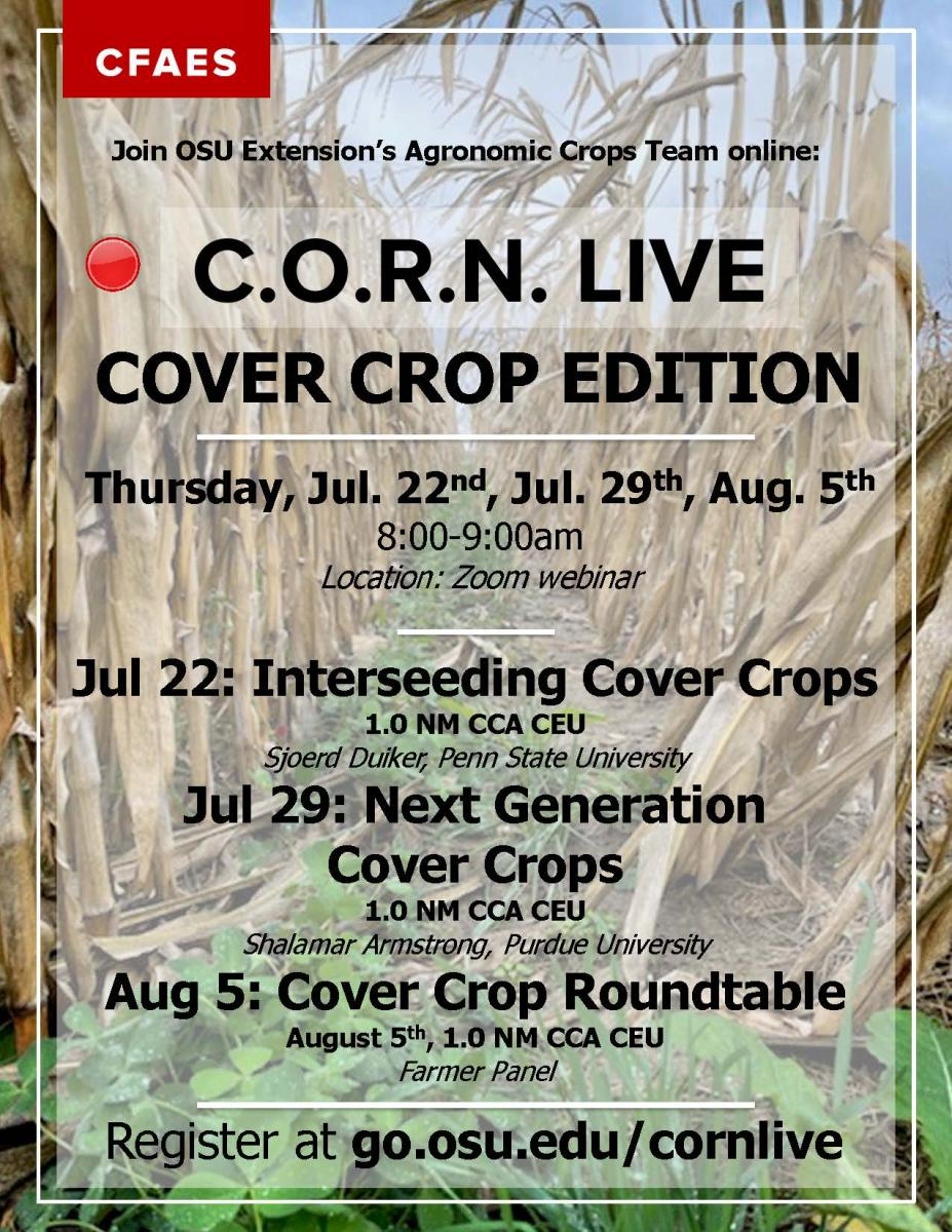 text advertising CORN live cover crop edition with background of cover crop multi species mix growing between rows of mature corn