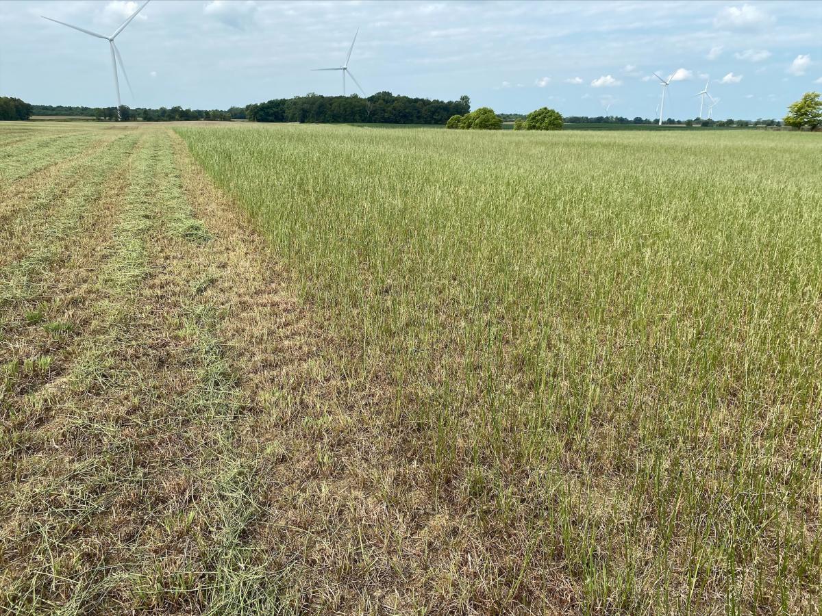 Alfalfa Field Mowed after Damaged, Photo Courtesy of Mark Badertscher