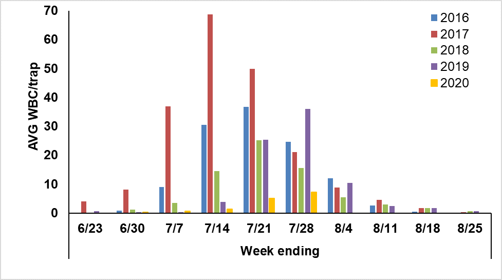 Figure 3. Average number of Western bean cutworm (WBC) moths captured weekly in Ohio from 2016 to 2020.