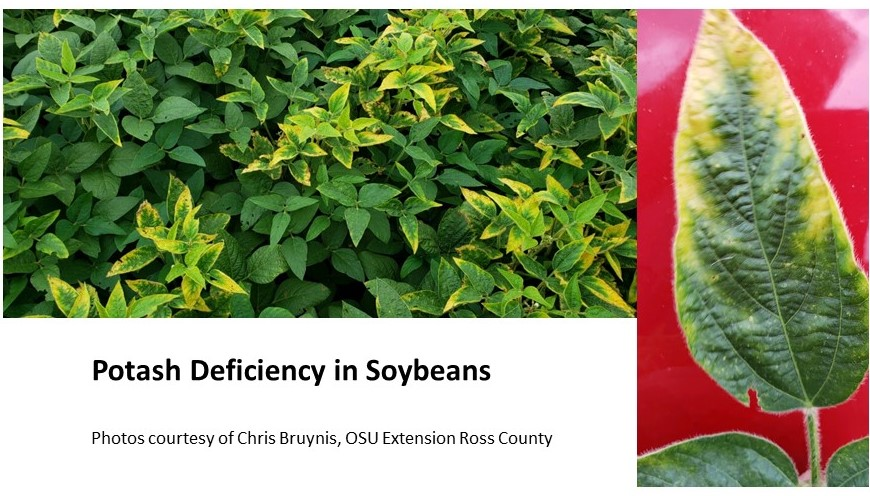 Potash Deficiency