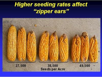 Zipper Ears