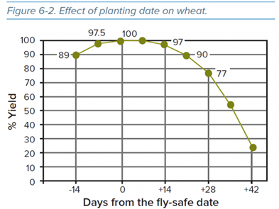 Effect of planting date on wheat