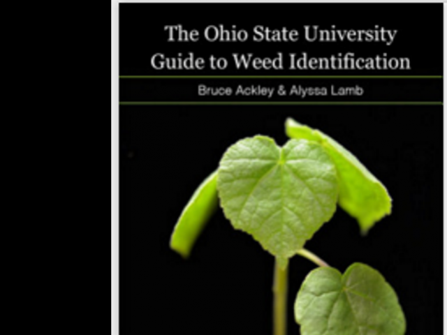 Digital Weed Identification Resources from OSU | Agronomic