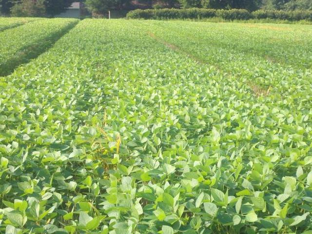 soybean planting how early is too early agronomic crops network