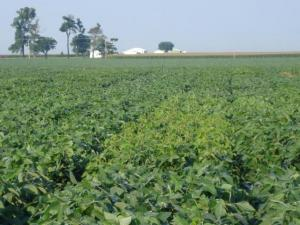 Soybean Performance Trials