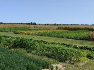 2020 Farm Science Review Agronomy Plots