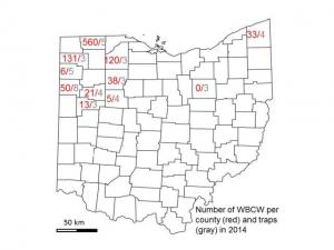 Adult Western Bean Cutworm Counts