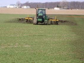 Application of manure to winter wheat