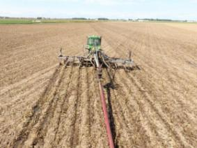 Manure Application to Wheat