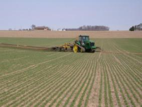 Topdressing Wheat with Liquid Swine Manure