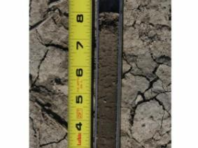 Soil sample 8 inches deep