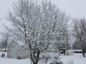 Snow from early last week.