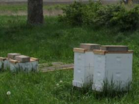 Bees at planting time
