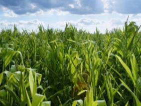 Corn, Soybean, and Alfalfa Yield Responses to Micronutrient Fertilization in Ohio
