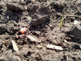 Planting depth considerations