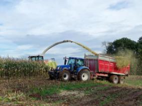 Silage harvest