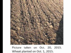 Wheat field, no wheat. October 20, 2015