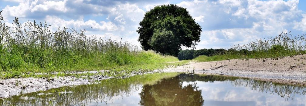 edge of unplanted field