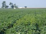 Soybean Performance Trials